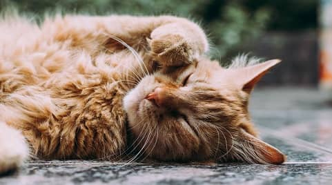 Depression in Cats – What Can You Do?