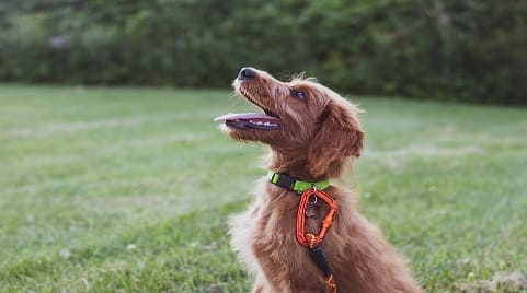 7 Exciting Puppy Training Tips