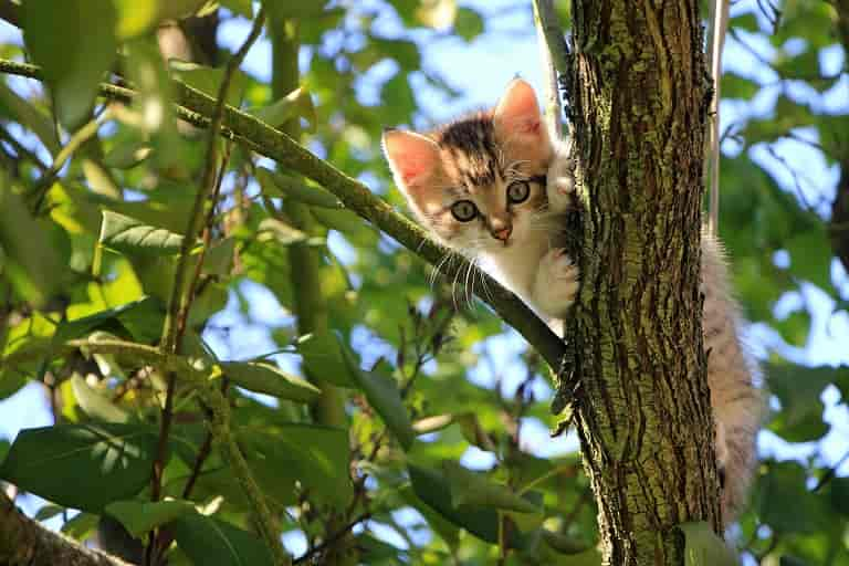 Why Does Your Cat Need a Scratch Tree