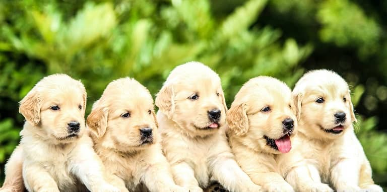 How Old Can a Dog Have Puppies