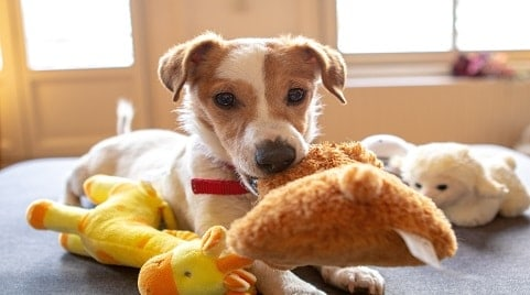 How Many Toys Should A Puppy Have?