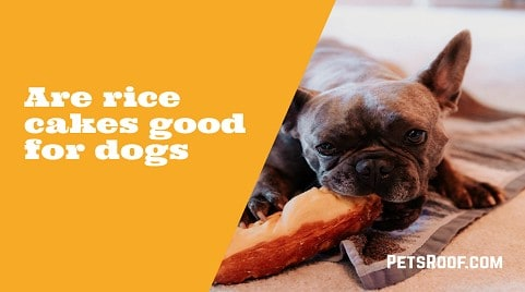 Are Rice Cakes Good for Dogs and Their Digestion?