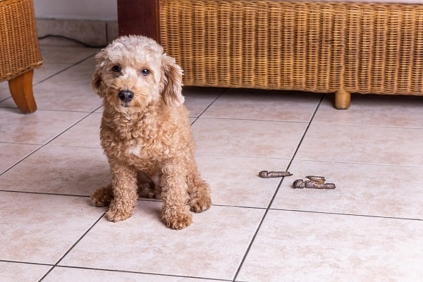 how to break a dog from pooping in the house