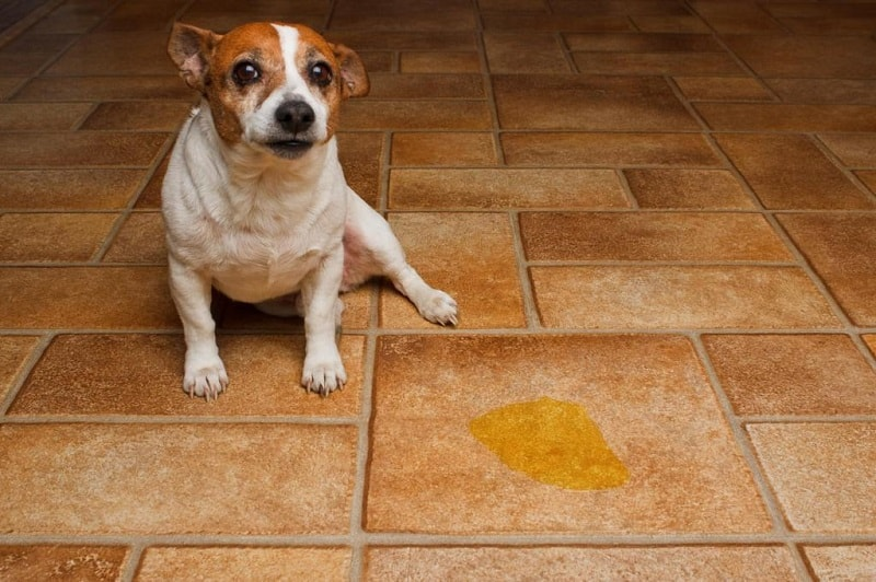 how to stop a dog from urinating in a certain spot inside
