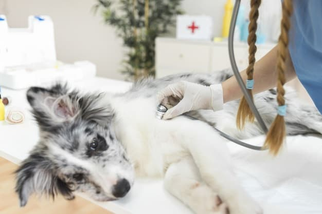 how to stop a dog from vomiting and diarrhea