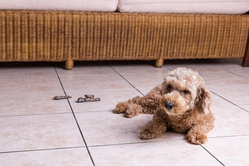 how to stop a dog pooping in a certain area