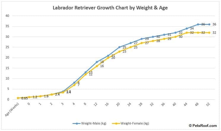 labrador retriever growth chart by weight & age