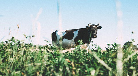 Are Dairy Products Good and Safe for Your Dogs to Drink?