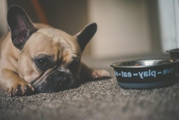 What Are the Signs of an Allergic Reaction to Food in Dogs?