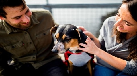 How to Create a Dog-Friendly Space in Your Home – The Simplest Guide