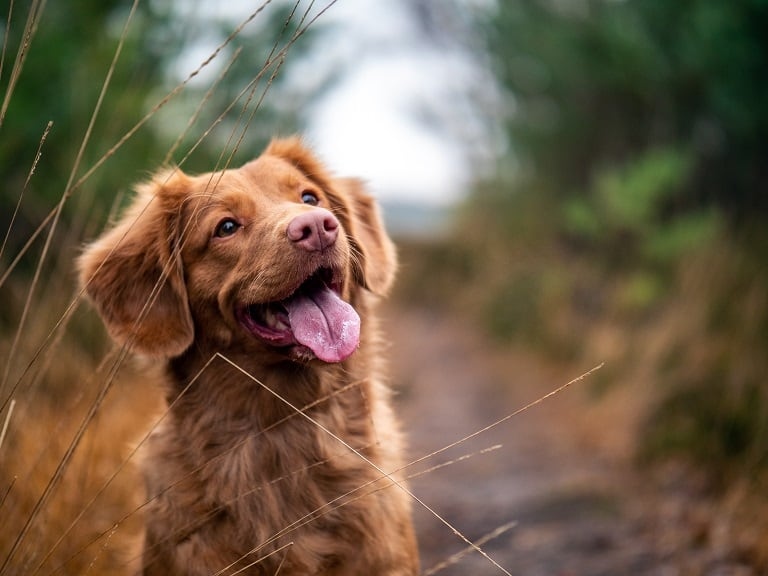 how to cure dog ear yeast infection