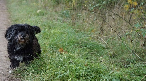 How to Get A Dog to Stop Eating Its Poop?