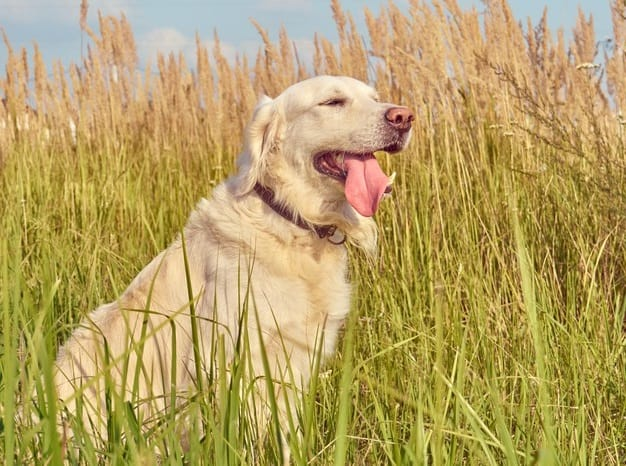 how to help a dog breathe better