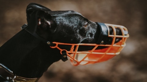 How to Put A Muzzle on An Aggressive Dog?