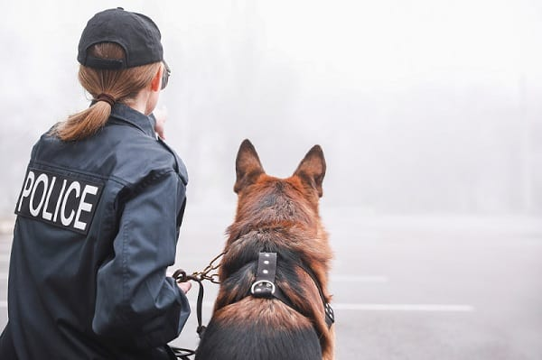 why do police use german shepherds