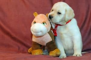 The 13 Best Toy for Lab Puppy [2021 Reviews and Comparisons]
