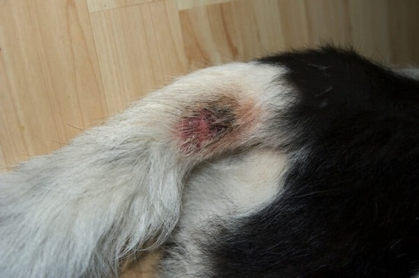 how to heal a hot spot on a dog
