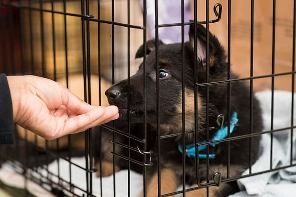 what size dog crate for german shepherd
