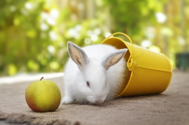 are apples good for rabbits
