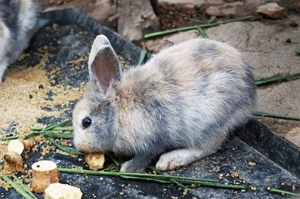 Can Rabbits Eat Potatoes or Are They Poisonous?