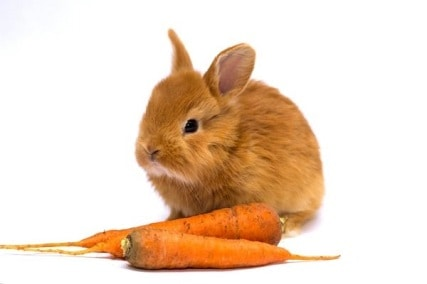 Little-Known Truth: Do Rabbits Actually Like Carrots?