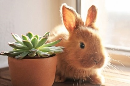 Do Rabbits Eat Succulents? Beware of These 10 Toxic Plants!