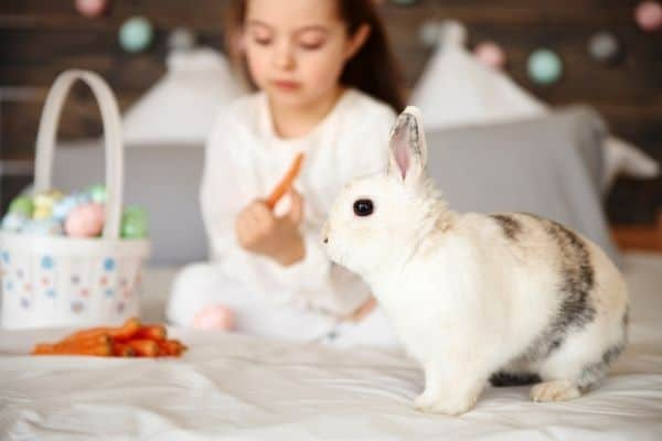 how long do domesticated rabbits live