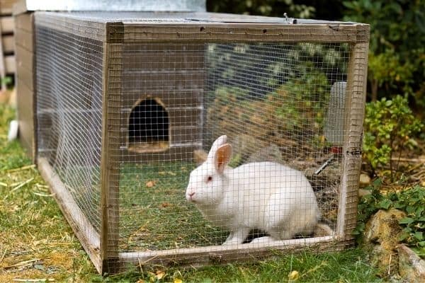how long do rabbits live as pets outdoors