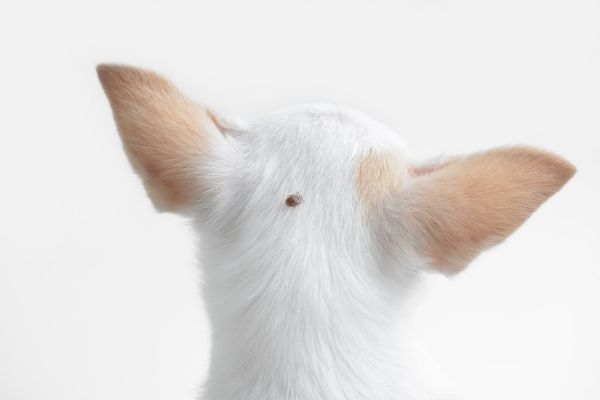 how to know if your dog has a tick