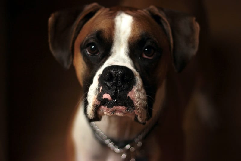 High Anxiety in One of Your Dogs