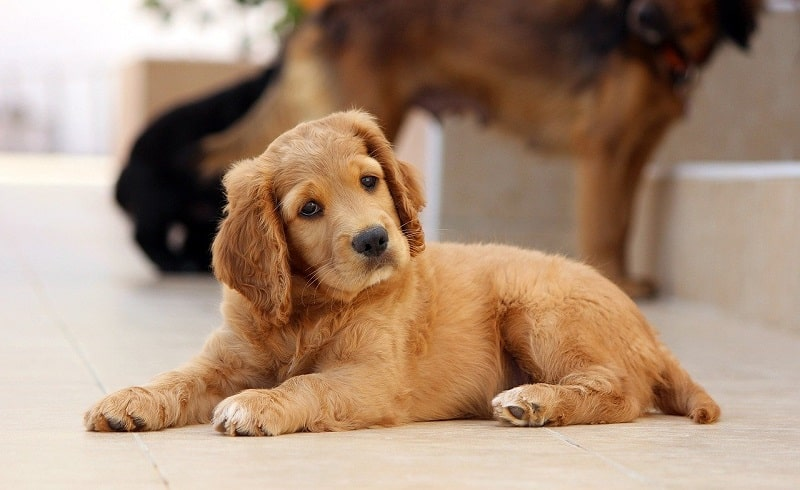 how to deworm a dog naturally