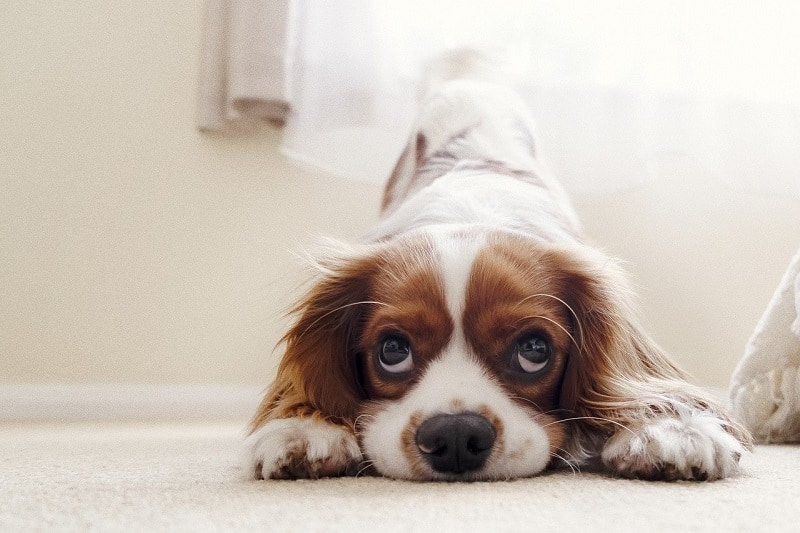 How to Deworm a Dog Naturally – No Harmful Chemicals