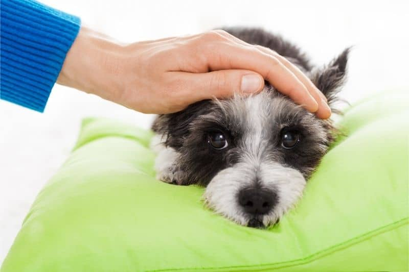 how to get rid of parvo in dogs