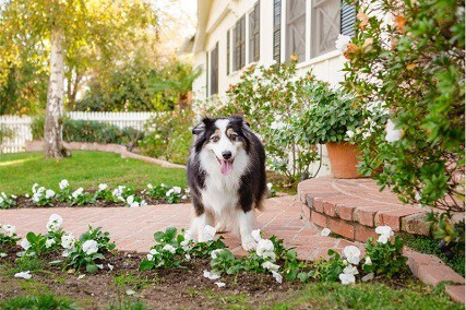How to Save Plants from Dog Urine