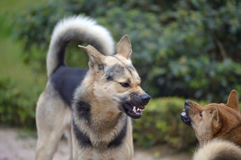how to socialize an aggressive dog with other dogs