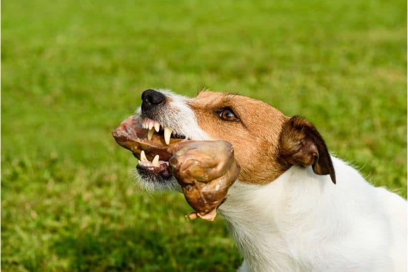 how to stop a dog from being aggressive with bones