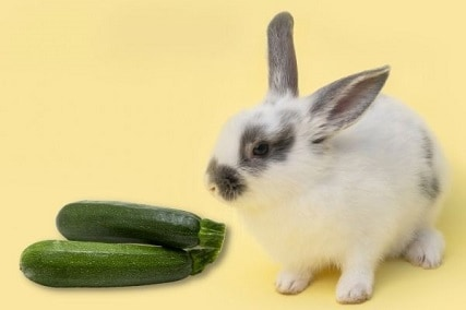 Can Rabbits Eat Zucchini (Leaves, Stems, Fruit, Flowers, Seeds)?