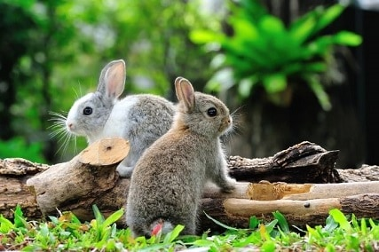 Is There a Difference Between a Rabbit and a Bunny?