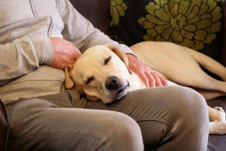 Why Does My Dog Sleep On Top Of Me? 5 Reasons Why