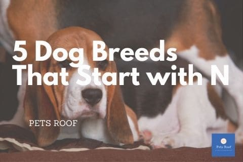 5 Dog Breeds That Start with N