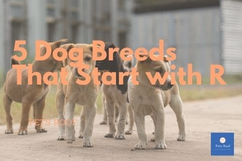 5 Dog Breeds That Start with R