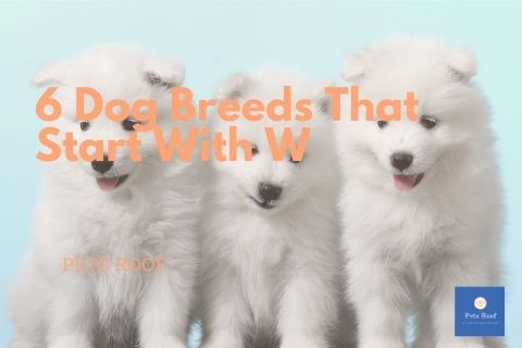 6 Dog Breeds That Start With W
