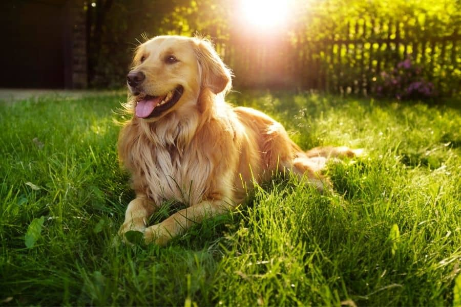 dog breeds with low prey drive