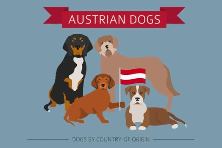 5 Types of Austrian Dogs Breeds (WIth Pictures)