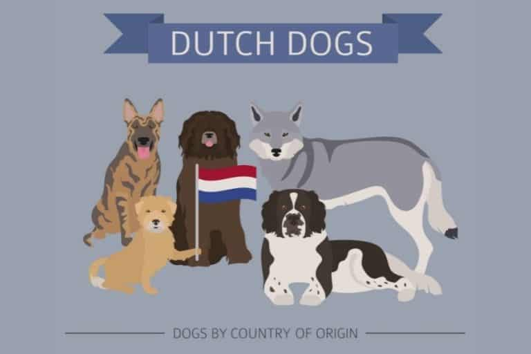 6 Types of Dutch Dog Breeds (With Pictures)