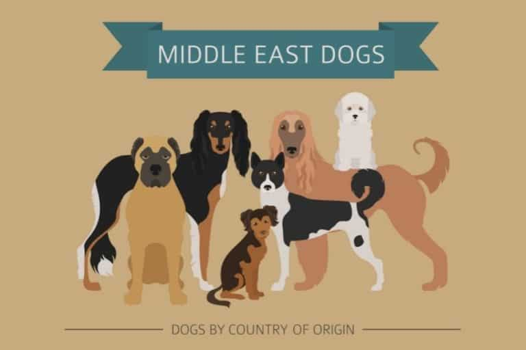 4 Interesting Persian Dog Breeds (With Pictures)