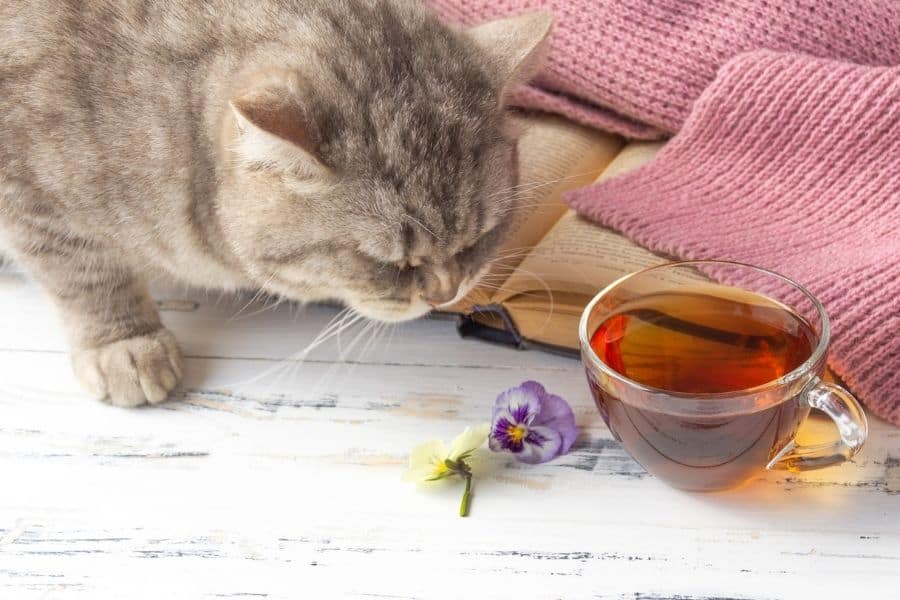 can cats drink tea