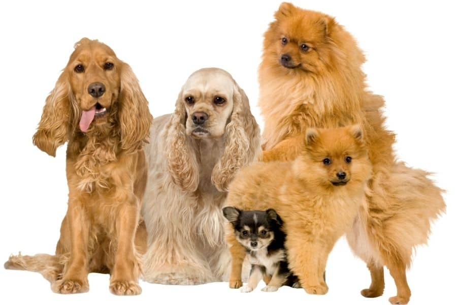 dog breeds by country
